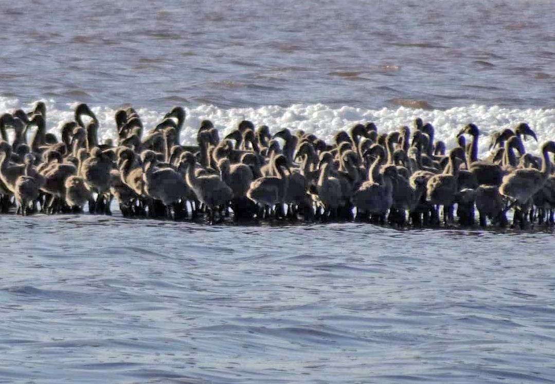 Fotografía publicada en el mensaje de Instagram del Director del Parque Natural de las lagunas de La Mata y Torrevieja