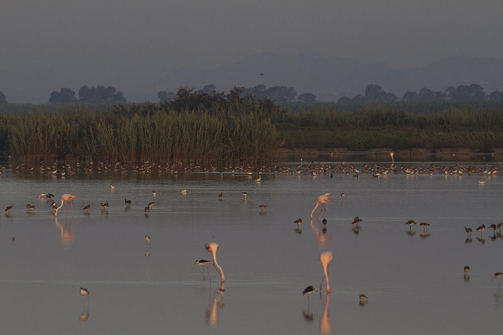Charca de la Reserva de fauna Suso Huertas, zona donde se pretende construir la torre-observatorio (S. Arroyo)